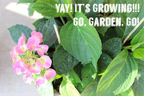 Gardenupdateheader