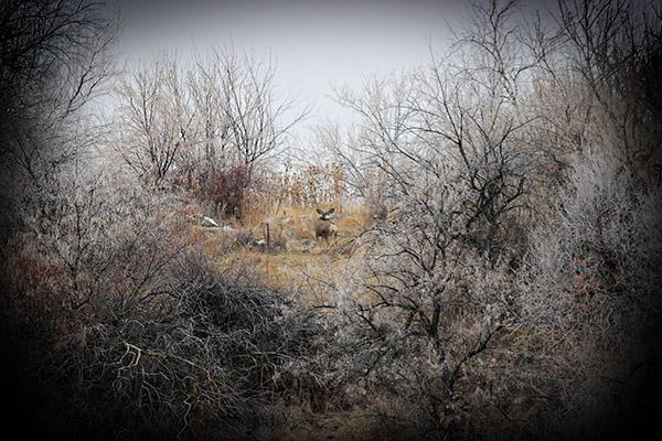 Deerblog