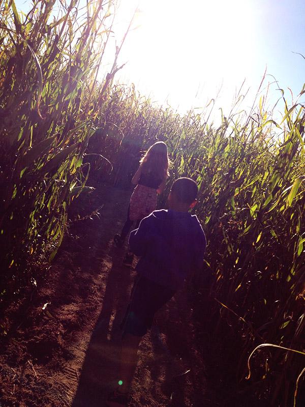 Autumn corn maze